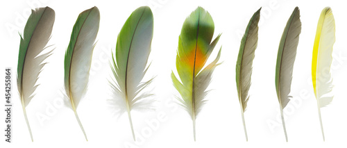 Obraz na plátně Beautiful collection feather isolated on white background