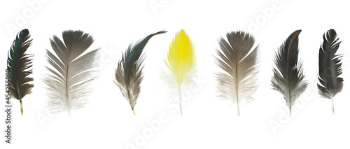 Fotografiet Beautiful collection feather isolated on white background