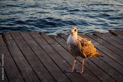 Fotografía a seagull standing on the pier