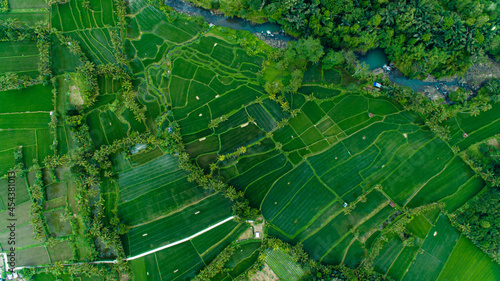 Fotografie, Obraz Arial drone landscape Bali green nature, rice terrace from above