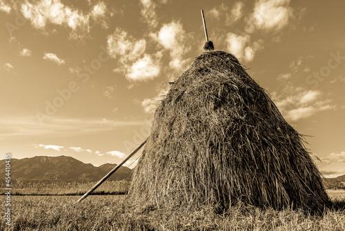 Photo hay bale at a farm