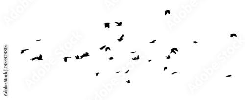 Fotografiet A flock of flying birds