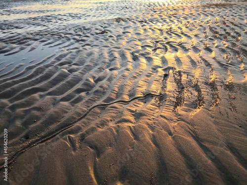 Carta da parati Empty golden sand beach at low tide at sunlight