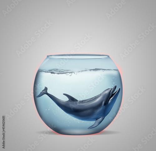 Fotografie, Obraz Dolphin in glass aquarium on light grey background