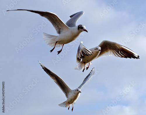 Fototapeta Beautiful shot of flying birds
