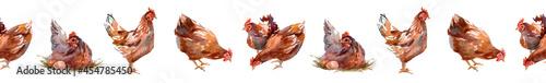 Fotografie, Obraz Beautiful multi colored hen illustration ,The four chickens in one strip
