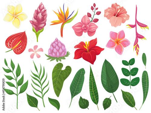Fotografie, Obraz Tropical flowers