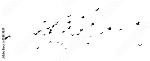 Photo A flock of flying birds