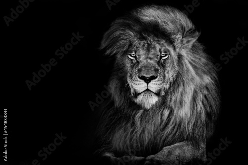 Photo Lion king isolated on black , Portrait Wildlife animal