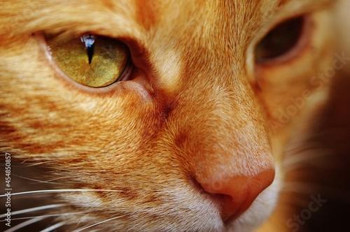 Fototapeta Cat