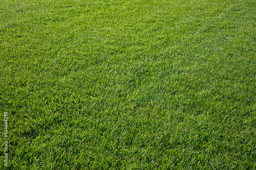 Foto detail of grass at the soccer field