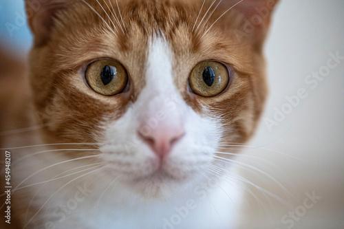 Obraz na plátně cat on a table