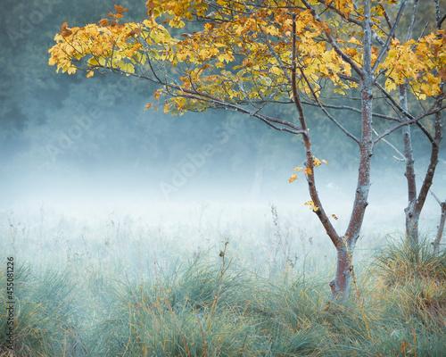 Fotografiet First of Autumn