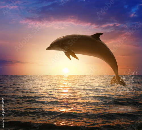 Fotografía Beautiful bottlenose dolphin jumping out of sea at sunset