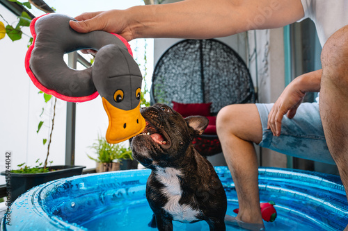 Fotografia Midsection Of Man Playing With French Bulldog Dog In Inflatable Swimming Pool At
