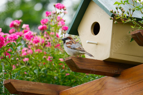 Small bird standing by birdhouse in rosegarden Fototapet