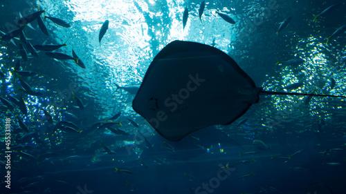 Obraz na plátně fish under water