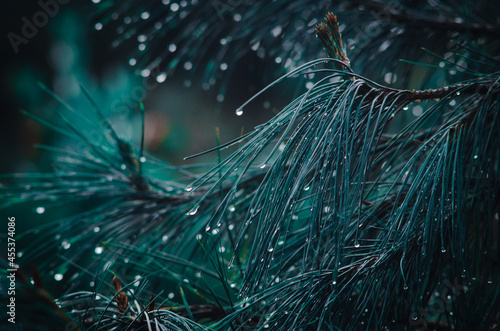 Fotografia, Obraz Plants with drops of a cold and rainy day