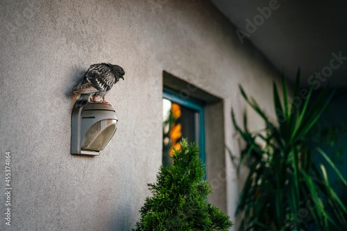 Canvas Pigeon resting on lamp in balcony