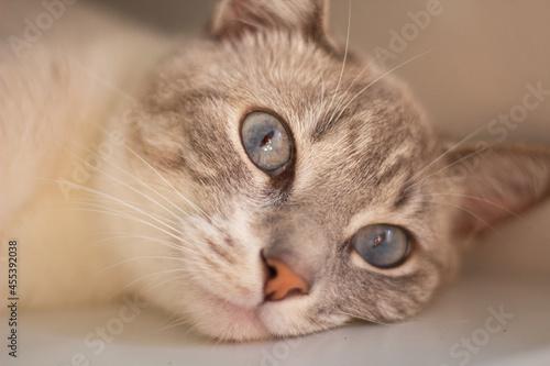 Obraz na plátně close up of a cat