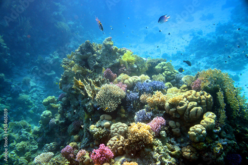 Fotografiet Underwater view of the coral reef