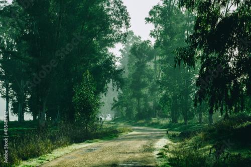 Paisaje de bosque verde en la naturaleza en soledad con arboles y hojas verdes, camino por el bosque solitario Fototapet
