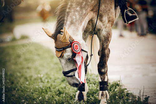 Fotografia, Obraz The muzzle of horse of the winner of the competition
