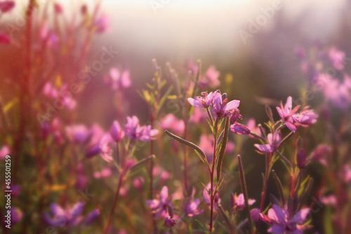 Letnia łąka