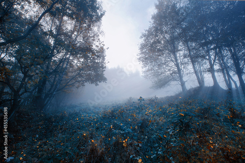 Jesienny mglisty krajobraz