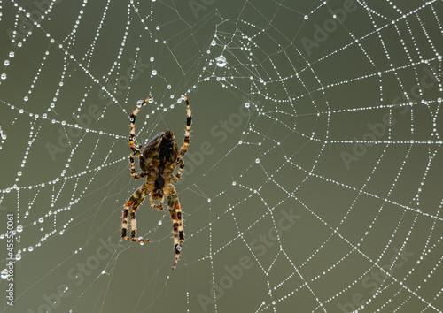 Spider on web Fototapeta