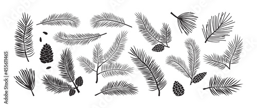 Fotografie, Obraz Pine branch, fir icon, vector evergreen plant, Christmas tree and pine cone