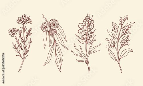 Fotografie, Obraz Hand drawn waxflower, blue gum eucalyptus, grevillea, wattle
