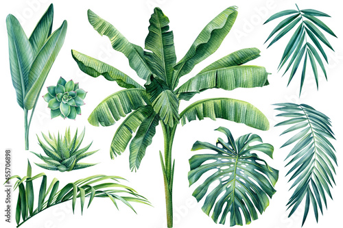 Tropical plants, palm, monstera leaf on isolated white background, watercolor illustration. Jungle design