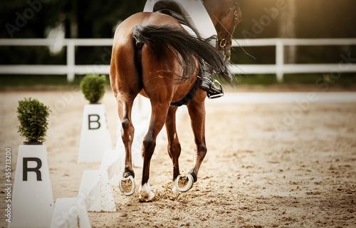 фотография Equestrian sport