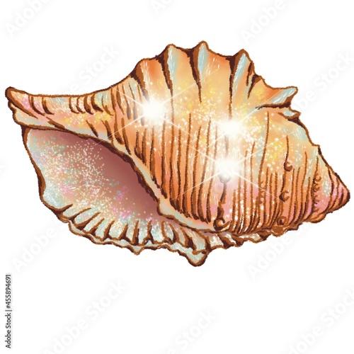Billede på lærred Illustration of a shell, digital drawing, isolated on a white background