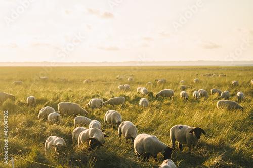 Tela Agriculture, farming and livestock in north France Bretagne region