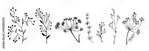 Fototapeta One line drawing flowers set