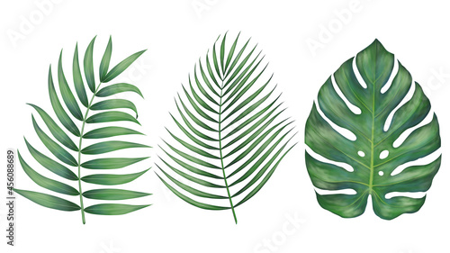 Fotografia Beautiful tropical leaves