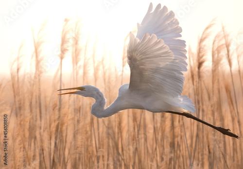 Fototapeta premium Birds