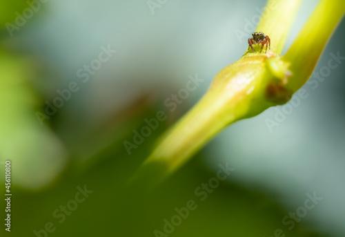 Fototapeta premium Insects