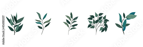 Fotografiet collection of diverse leaves of natural plants vector illustration