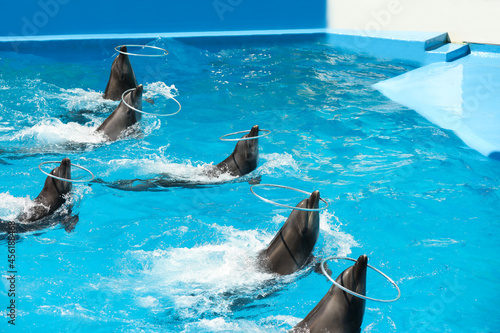Cute dolphins playing with hoops in pool at marine mammal park