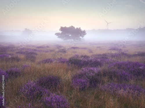 Obraz na plátně Morning mists on the moor. Westruper Heide nature reserve in the