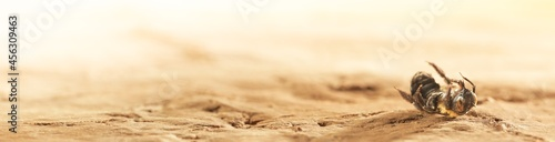 Fotografia Dry desert soil with a single dead bee