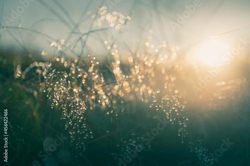 Murais de parede Green grass with morning dew at sunrise