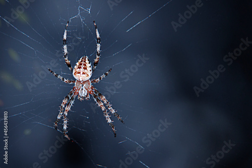 Fotomural Spider weaves a web. Abstract blue background. Halloween concept.