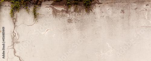 Fotografiet Naturalne tło postarzanego muru z teksturą pęknięć z zieloną rośliną - rozchodnik