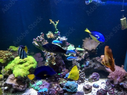 coral reef and fish Fotobehang