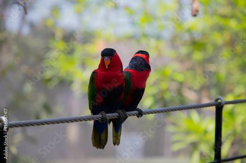 Fototapeta premium Birds of Life