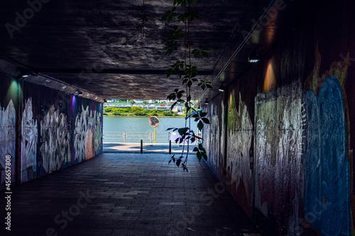 Carta da parati Vine in tunnel -Hangang riverside Gangnamgu, Seoul, Korea